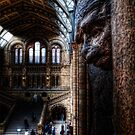 NHM Right Monkey by Alan E Taylor