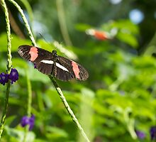Butterfly - Butterfly Conservatory - Niagara Falls, Ont. by Josef Pittner