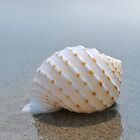 Seashell on the sand at the ocean beach 7 by Anton Oparin