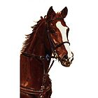 Proud - Thoroughbred Horse iPhone & iPod Cases by Patricia Barmatz