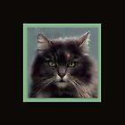 Katzy by Laurel  Coleman