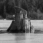 Old Man of the Lake by Jamey Sanger