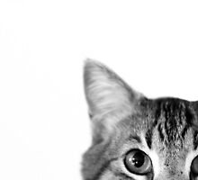 Curiosity by Garret DeWinter