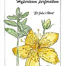 Hypericum perforatum by Maree Clarkson