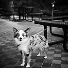 Mitsie in Central Park by Lidia D'Opera
