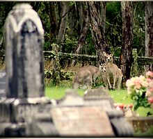 Cemetery Visitors  by myraj