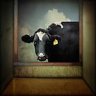 The Curious Cow by Debra Fedchin