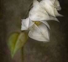 Sombre Mood by Dianne English