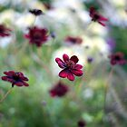Les Fleurs Du Mal by Hirondelles