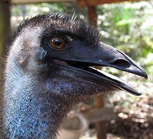 Lucky The Emu at Peel-Zoo, Pinjarra, Western Autralia by Toni Kane