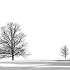 Winter trees by cclaude