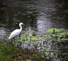 Egret on a Fishing Trip by joevoz