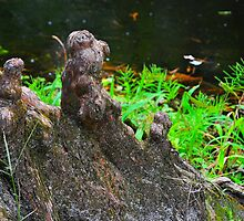Cypress Knees by joevoz