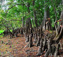 Cypress Forest by joevoz