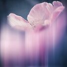 Fading Beauty by VIAINA 
