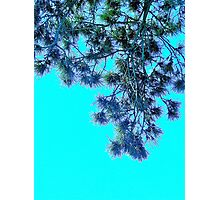 Needles and Sky Photographic Print
