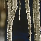 icicles by Veronica Timpanelli