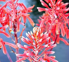 Aloe in front of a water fountain by ♥⊱ B. Randi Bailey