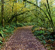 Taking a walk in Autumn by Kay Martin