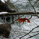 Winter on the North Fork of the Nooksack by rferrisx