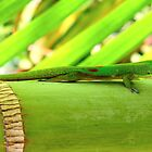 Hawaiian Gecko by karolina