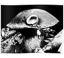 Mushroom Cap Macro Poster