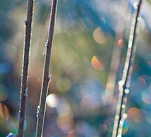Winter Sparkle by Aimee Stewart