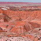 The Painted Desert  8078 by Bo Insogna