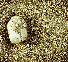 Beach Stone-5 by ScaredylionFoto