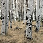 ArizonA Aspens by David  Postgate