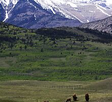 Mountains and Buffalo by Alyce Taylor