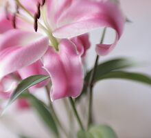 Pink Lily by WestawayStreet