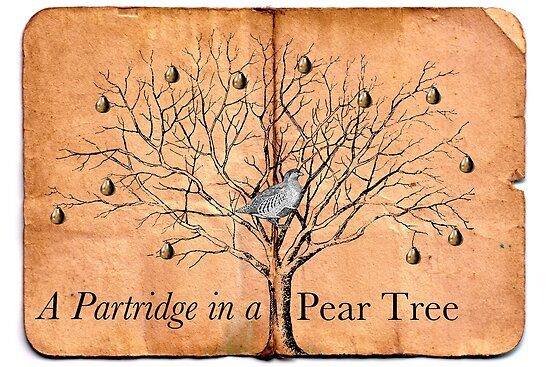 A Partridge in a Pear Tree by Claire Elford