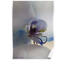 Unusual coloured orchid Poster