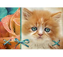 Raindrops on Roses and Whiskers on Kittens Photographic Print