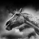 Horse (22-5) After the Storm II . by Raymond Kerr