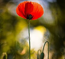 Poppy's Last Day by Sarah-fiona Helme