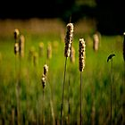 ♫♪ ♪♫ Green Grow The Rushes O ♫♪ ♪♫ by Chris Lord