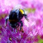 Sedum Bee by missmoneypenny