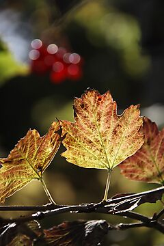 West Sweden Autumn colour by Jeanne Horak-Druiff