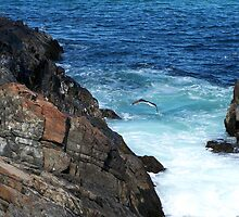 Bluey Blue....Marginal Way by RoyceRocks
