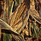 Corny Portrait by Jim  Egner
