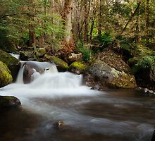 Taggerty Cascades, Marysville, Victoria by Julie Thomas