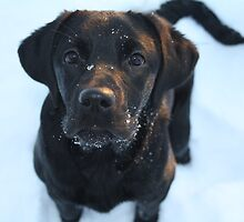 Snow puppy by Leannehhh