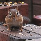 Chipmunk  by Lolabud