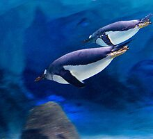 Penguin Sprint by Stephen Balson