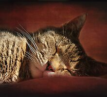 The Old Lady Naps by Rachelo