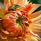 Little King Of The Dahlia by Marvin Mast