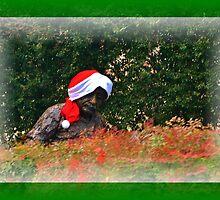 """Poor """"Santa"""" Einstein by Eileen Brymer"""