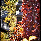 Morningside Park in Autumn by Forrest Harrison Gerke
